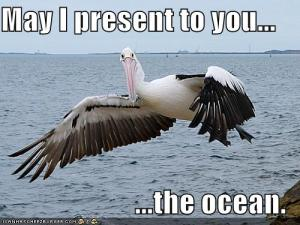funny-pictures-pelican-shows-you-the-ocean